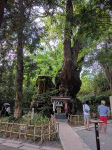 本州最大とされるご神木